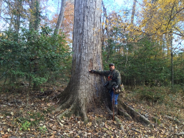 Frank w:Chestnut Oak