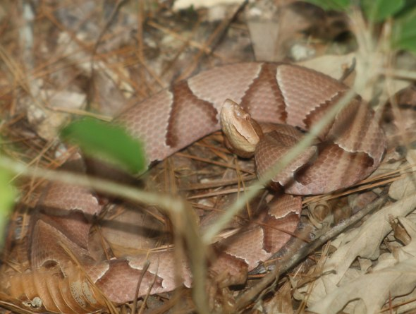 copperhead 1