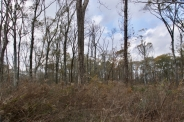 Tornado damaged patch of forest along Sharkey Road, east of the Tensas River, Tensas NWR, December 2016