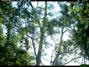 Trail Cam Image 1096, August 11, 2009
