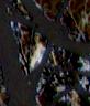 2009img_442 Detail